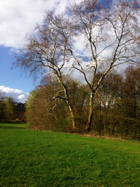 Fuerst-zu-Loewenstein-Stiftung_Schlosspark-4.jpg