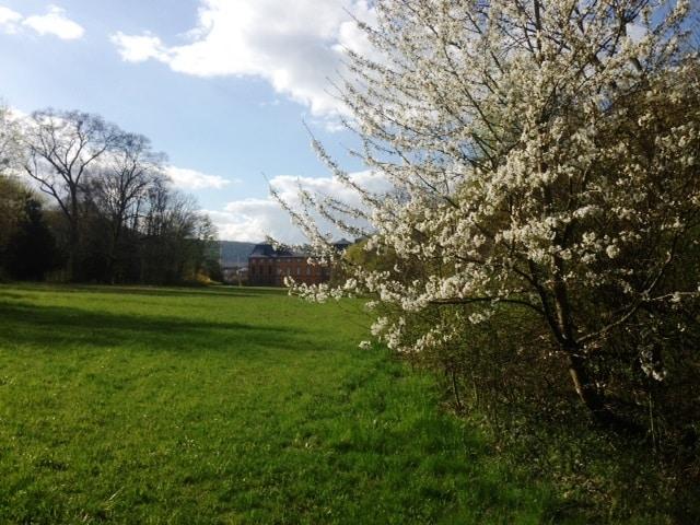Schlosspark-3.jpg