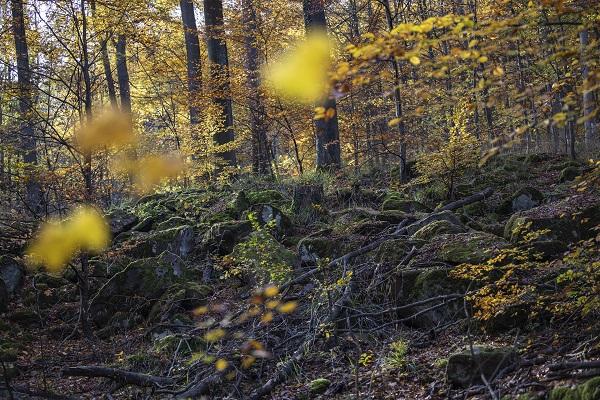 DREI-AM-MAIN-Felsenmeer-3-im-Wald-©-Holger-Leue.jpg