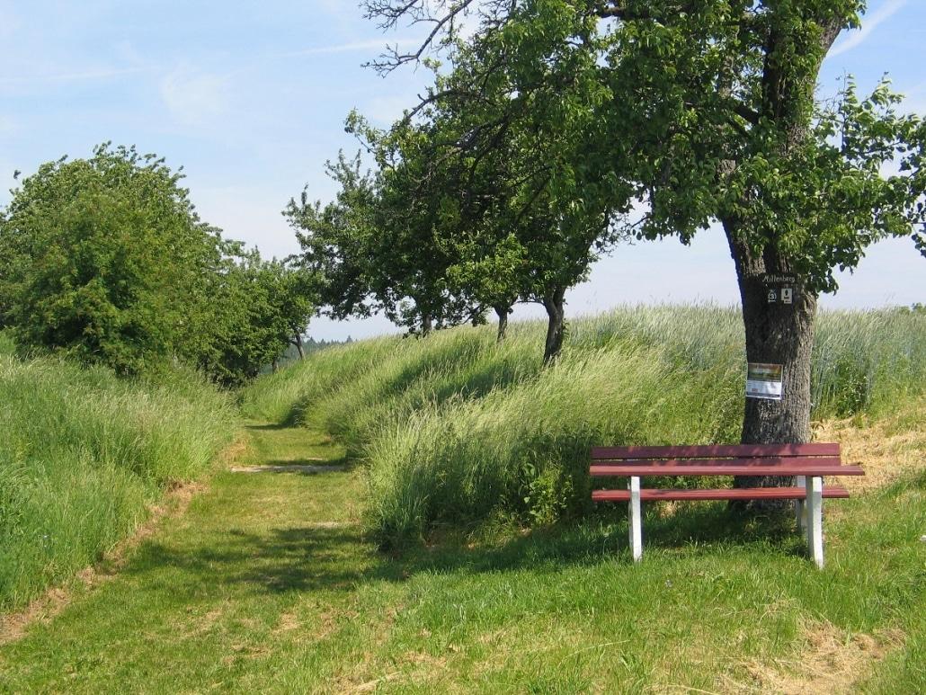 DREI-AM-MAIN_Wanderweg-M3-web-1030x773-1.jpg